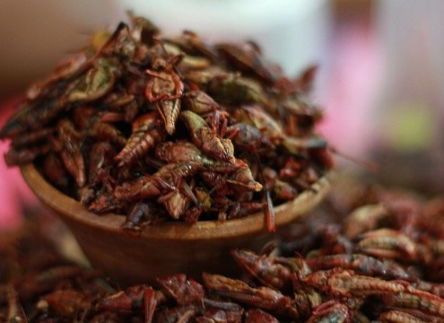 Lime and Chile spiced chapulines for sale in a market in Oaxaca, Mexico. Chapulines, grasshoppers, are a traditional snack in Oaxaca, they are fried, seasoned and eaten. They can also be served as a filling for tortillas or as an ingredient in other dishes.